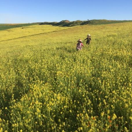 Spring in Morocco 2017 (11)