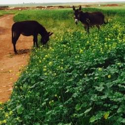 Spring in Morocco 2017 (3)