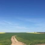 Spring in Morocco 2017 (4)
