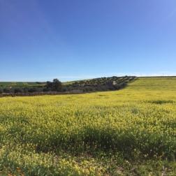 Spring in Morocco 2017 (6)